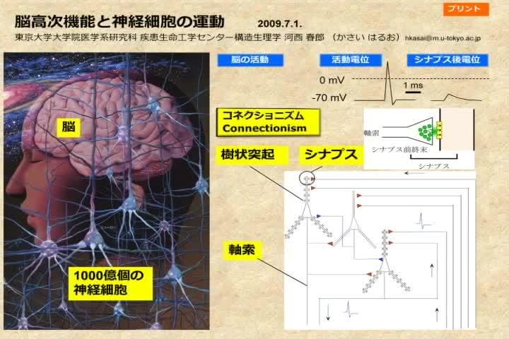 脳高次機能と神経細胞の運動