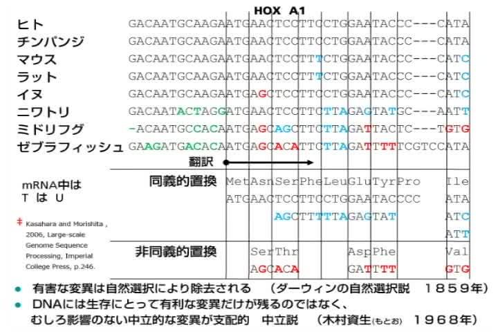 ゲノムと進化 -人類への道